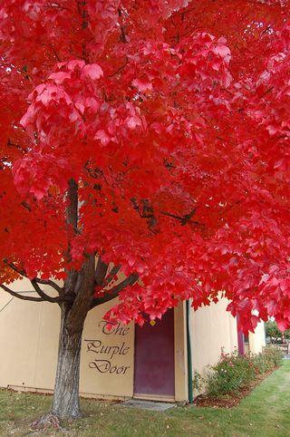 WEB-Red-Tree,-Purple-Door-GP-Nov-12-2011-DSC_0284
